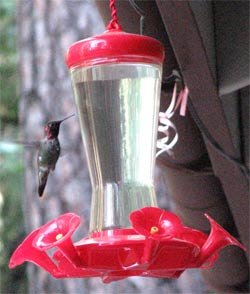 Learn about Hummingbirds