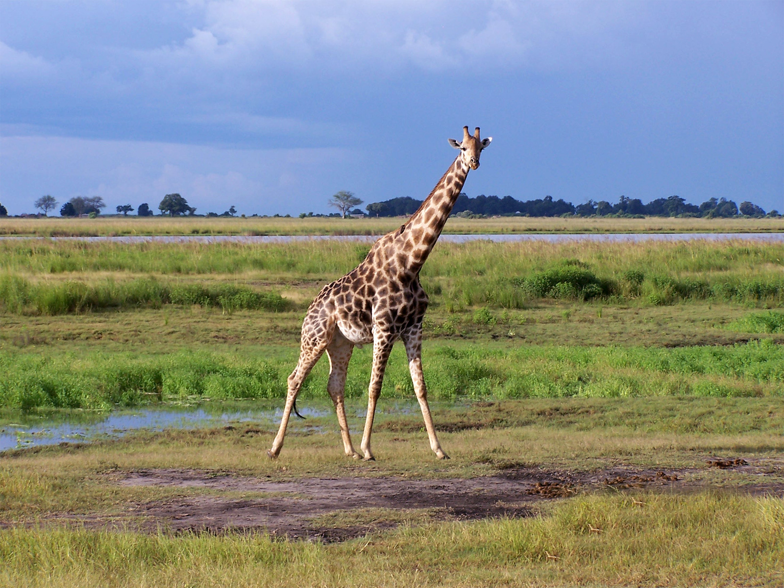 African Wildlife Desktop Wallpapers Slideshow