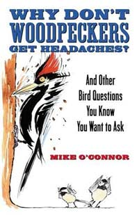 Why Don't Woodpeckers Get Headaches: And Other Answers to Bird Questions You Know You Want to Ask