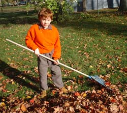 Brennie Raking the Fall Leaves [Click for enlarged view]